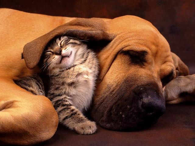 perro y gato aranjuez1404